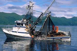 SE Alaska Salmon Purse Seining Boat Photo